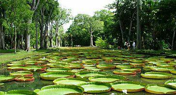 Pamplemousse Garden